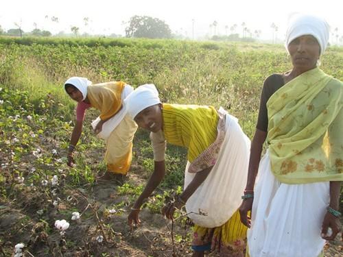 Fairtrade Workers