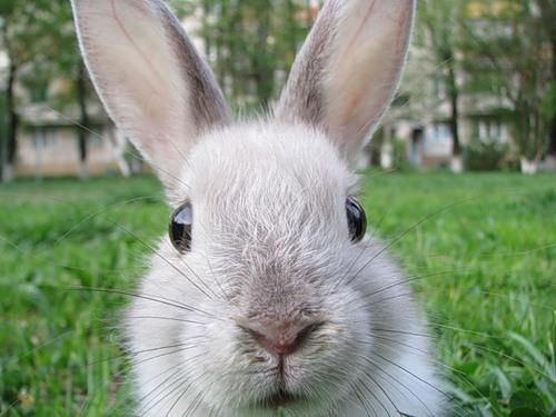 19-04-rabbit-3