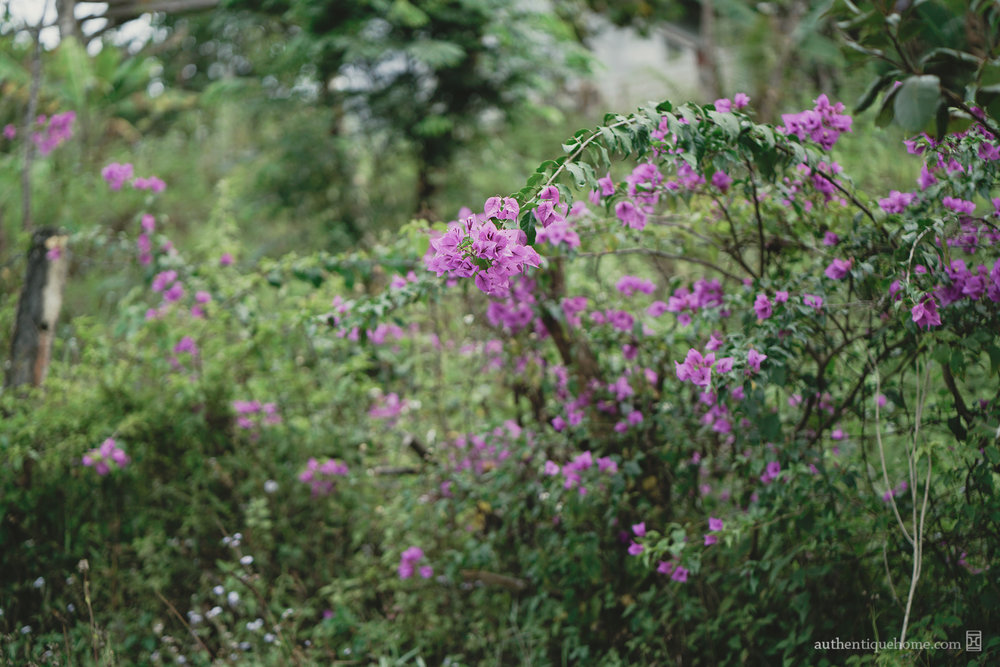 In this endeavour, we at Authentique have turned to one of the most darling and familiar displays of natural beauty in the Vietnamese landscape: the bougainvillea. The bougainvillea is often seen bountifully adorning the town houses and courtyard gardens of all kinds of Vietnamese families, from rural countrysides to upperclass neighbourhoods. Displayed in a bright variety of colours, this light-hearted flower is composed of delicate, textured petals, the softness of which has given it the name  hoa giấy,  or paper blossoms, in Vietnamese. It is this ephemeral softness that inspires us so, and that we seek to lastingly capture in the elegant ceramics and textiles that make up our homes.
