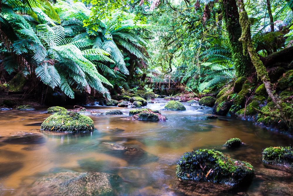 Tasmania-12.jpg