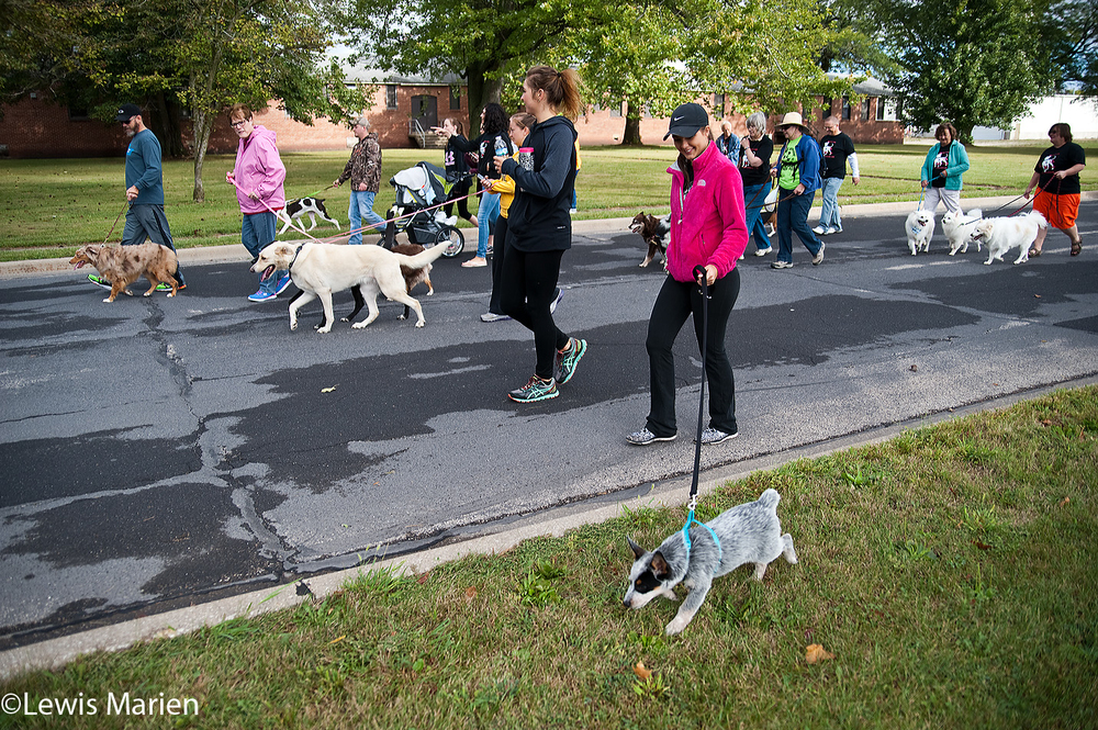 Participants walk the one-mile route during the 23rd annual Doggie Jog on Sept. 19 at the Prairieland Animal Welfare Center in Galesburg, Ill.