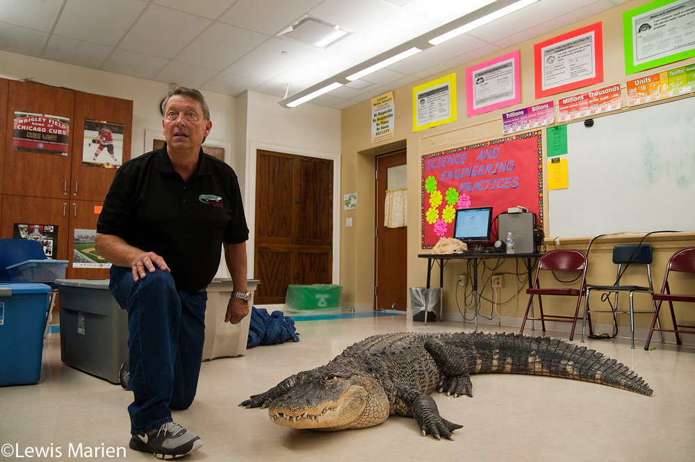 Jim Nesci, of Homer Glen, Ill., shows off his near 9-foot alligator Bubba to students at Lombard Middle School in Galesburg, Ill., on Oct. 15. Nesci brought several cold blooded creatures for the students in a class to touch and get a close-up view of.