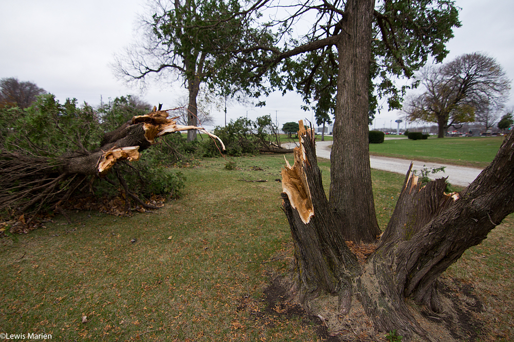 Trees were uprooted late night Nov. 11 and early Nov. 12 from a wind storm at Memorial Park Cemetery in Galesburg, Ill.