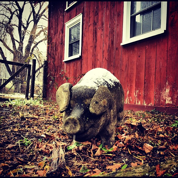 For 20 years, this pig has been standing guard in front of the barn that I inhabited during middle and high school. In the 10th grade my band wrote and recorded a song about this pig. To this day, this pig has no name.