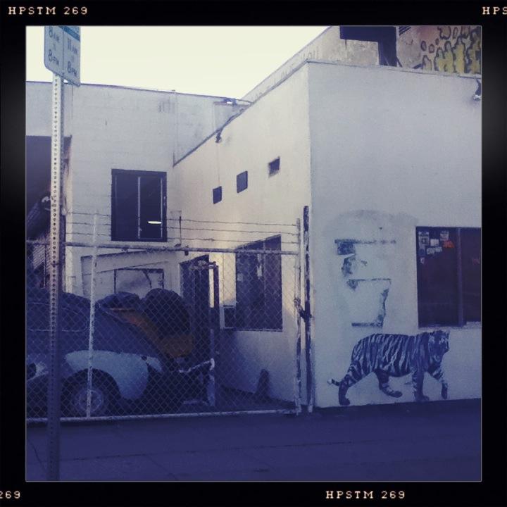 Tiger. Los Angeles, CA