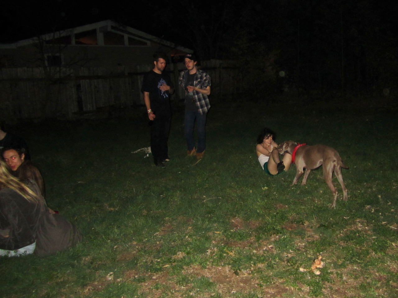 Backyard canine wrestling, 3am. Austin, TX