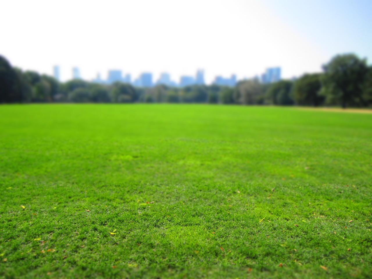 Great Lawn. NY, NY