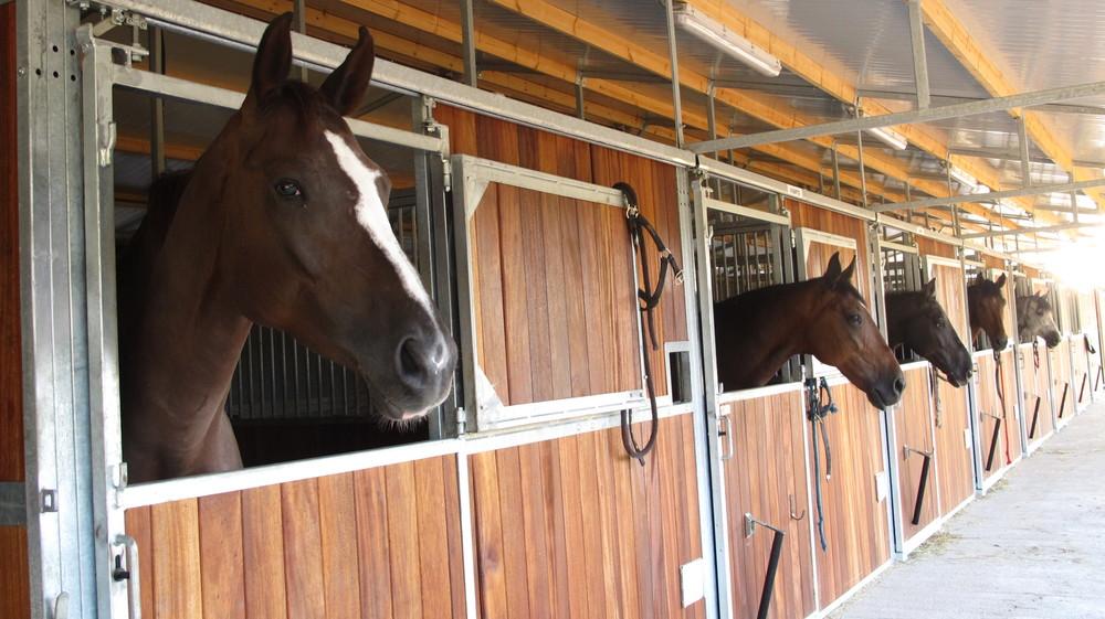 pupilaje-caballos-boxes.JPG