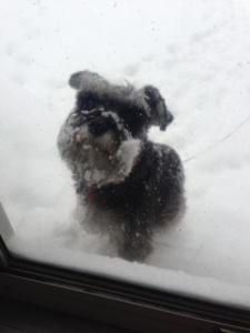 shasta-snow.JPG