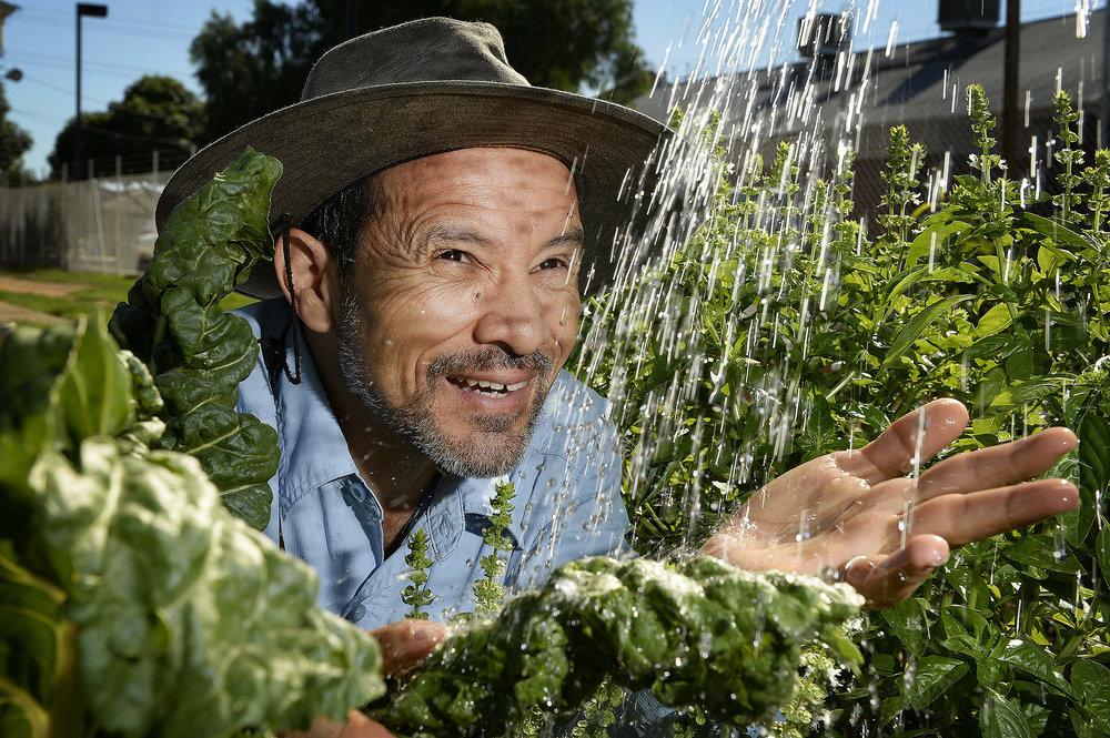 CHP_Export_135002675_Volunteer Luis Arriola  in amongst the vegetables at the %27Kilburn Peace and Wel.jpg