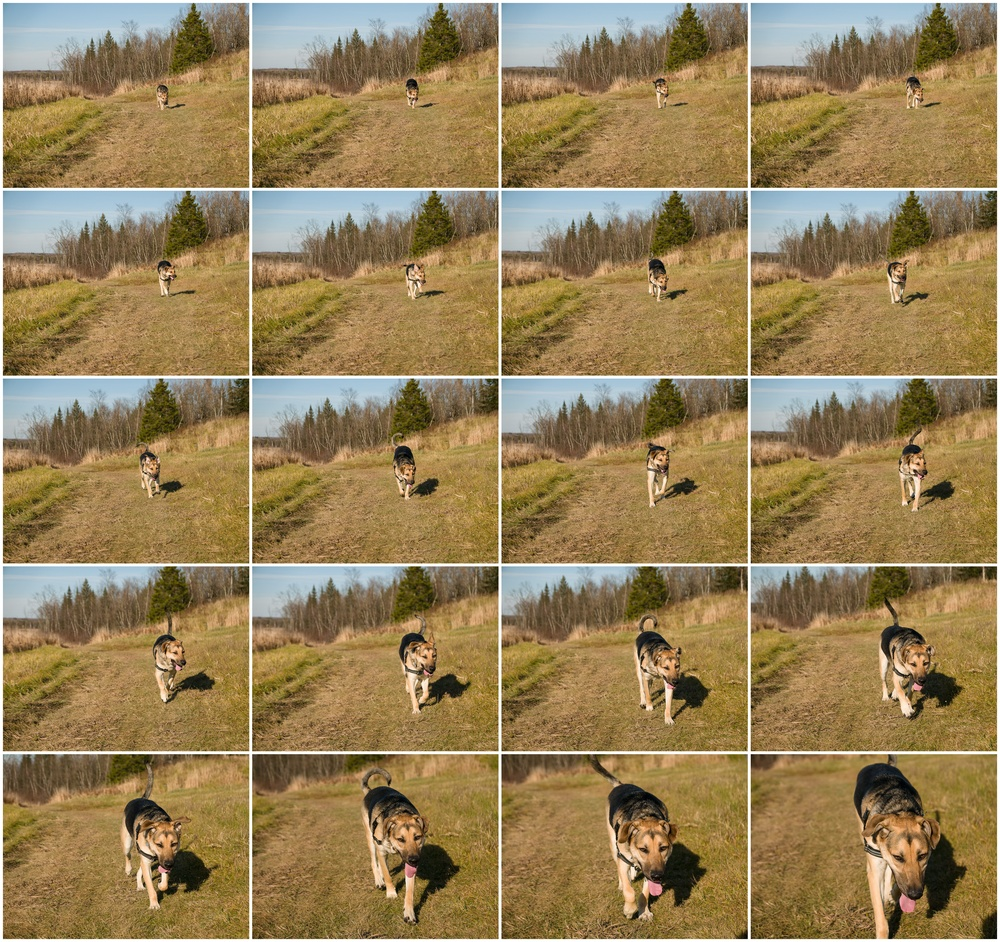 20 photos in C-AF at 75mm f/2.8