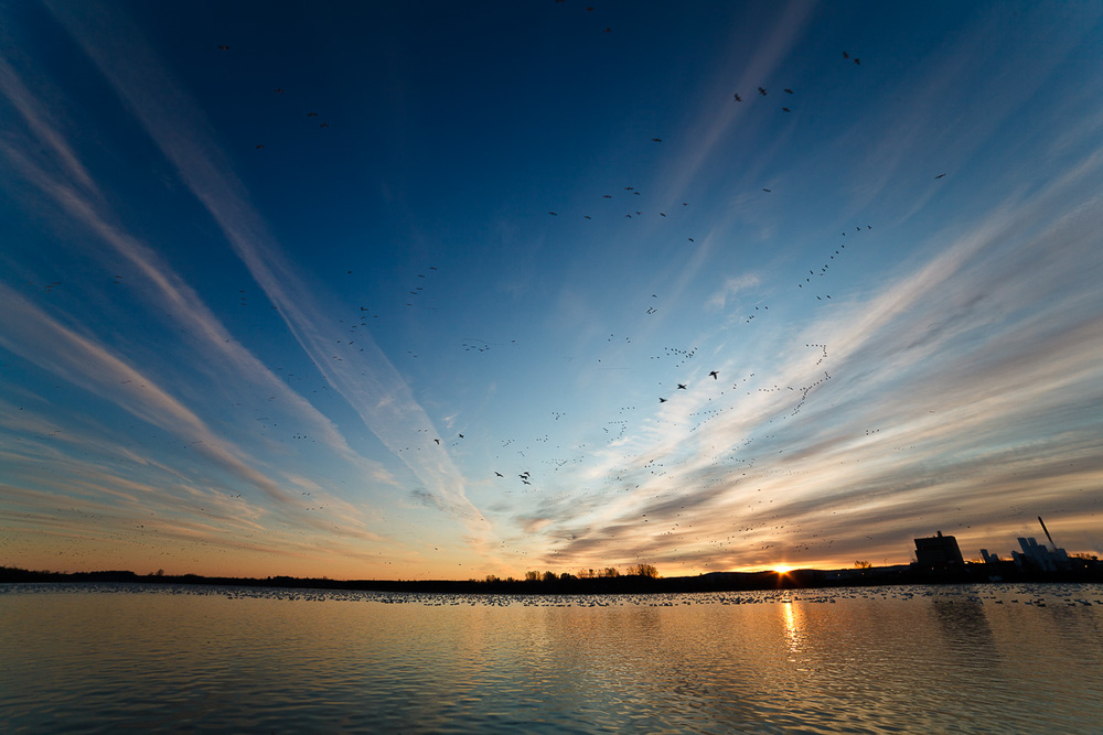 Canadian Geese Migration - Ultra Wide Angle