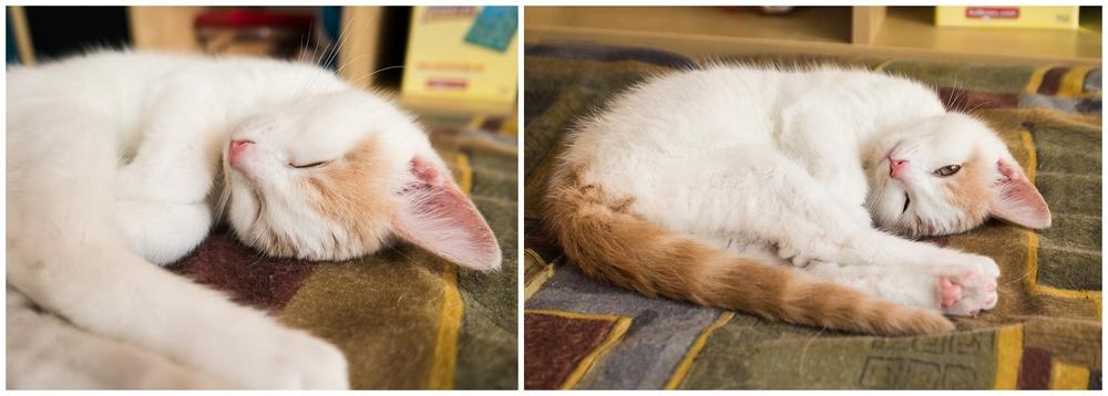 C'est zen un chat qui dort ;)