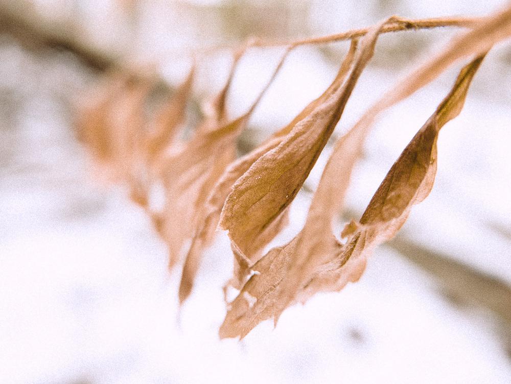 L'hiver s'installe et la nature s'endort