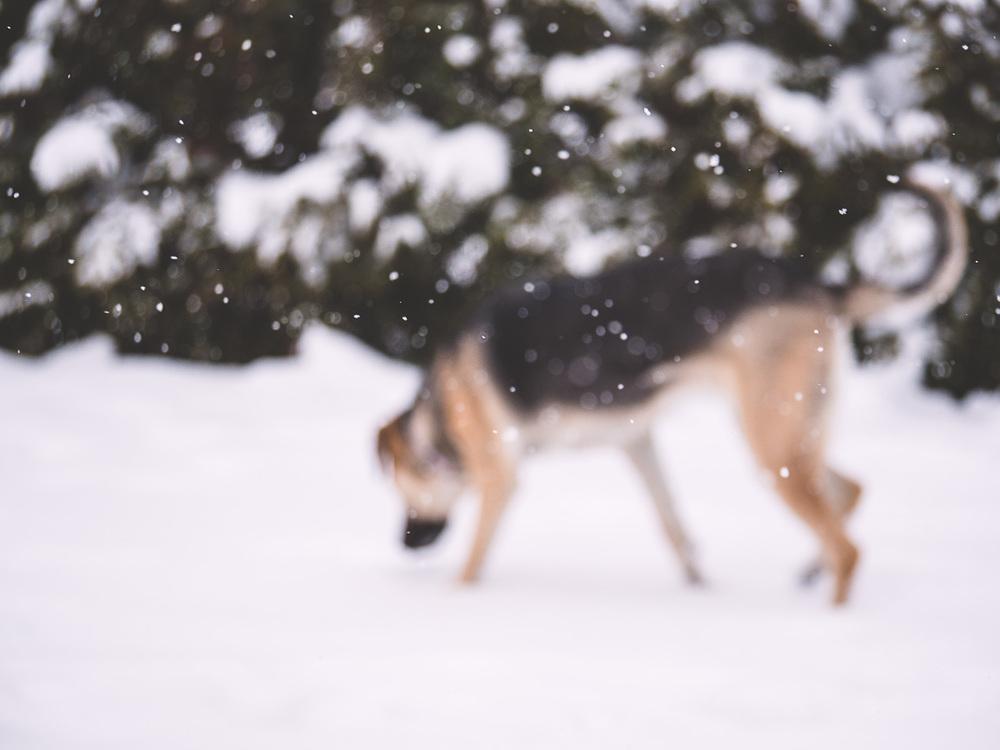 My dog loves snow