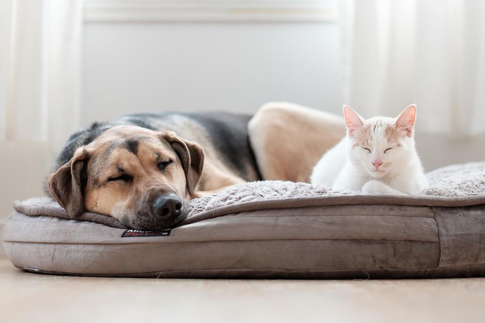 Peace treaty over Roxy's bed