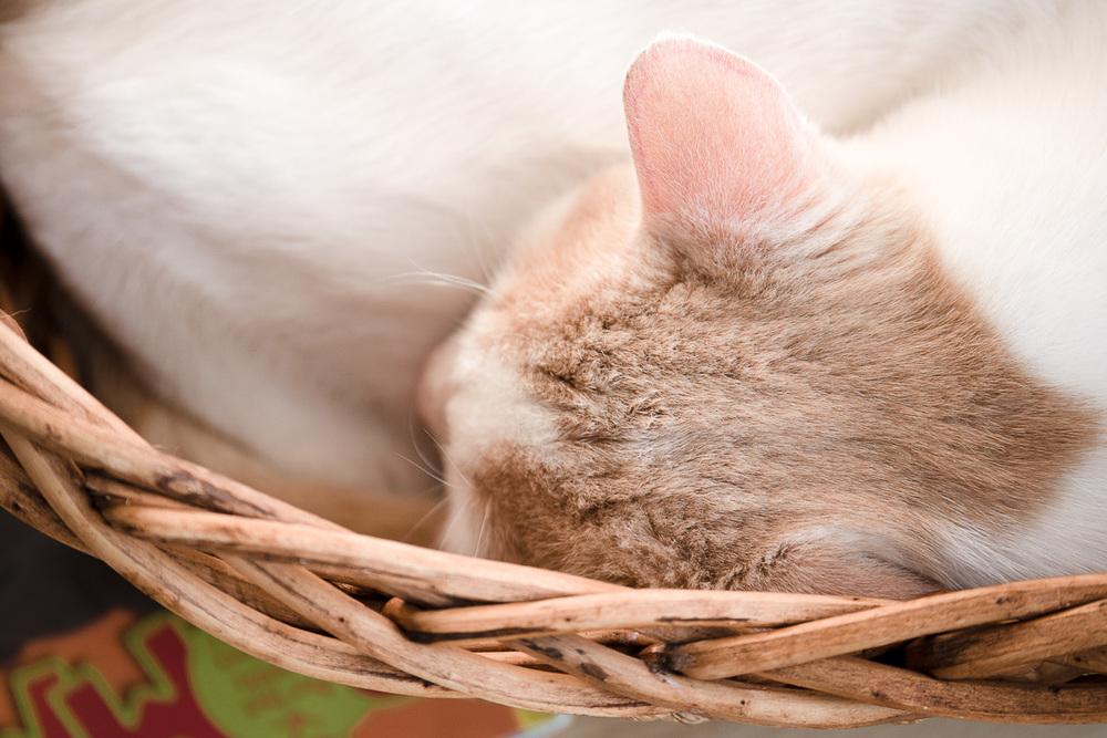 """Mya in """"his"""" basket"""