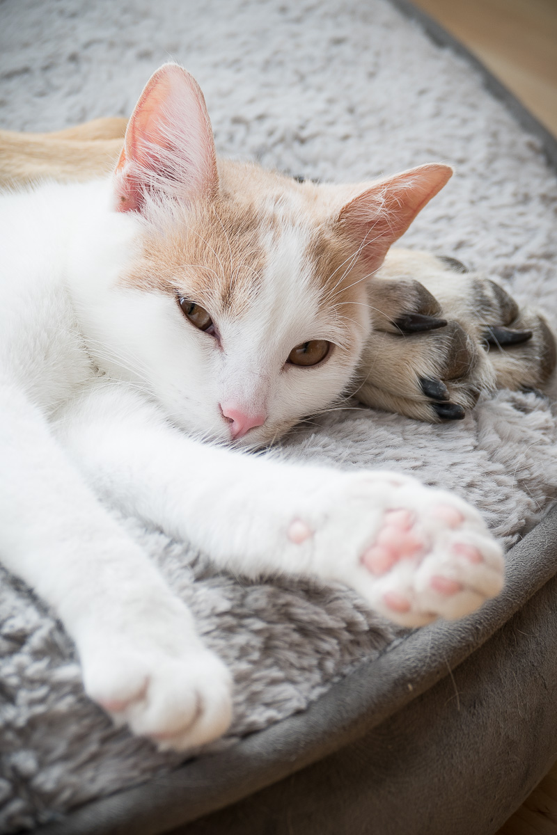 Don't bother me, I'm sleeping on my dog