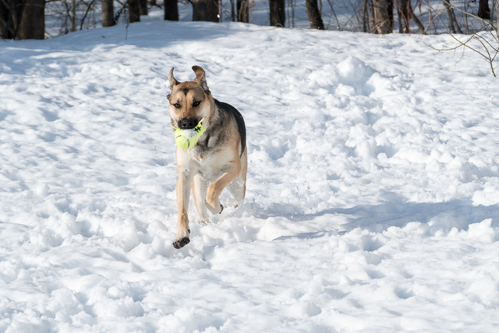 Roxy helping me test C-AF on the FZ1000