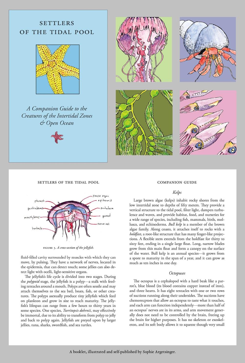 web layout 31.jpg