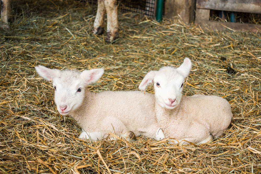 17.05.12 SheepFarm-05.jpg