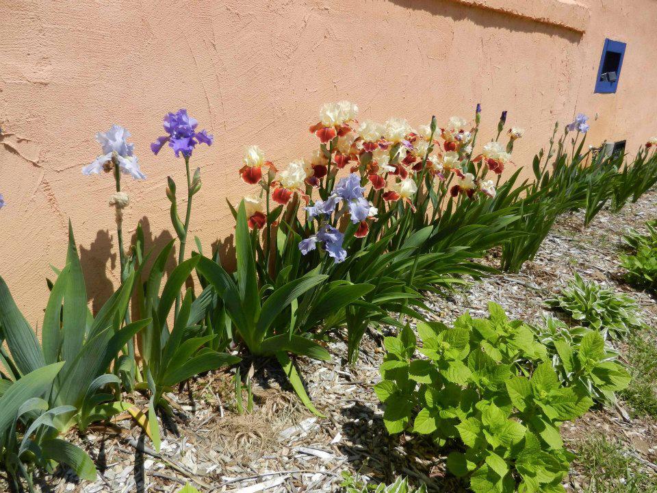 17-flowers.jpg