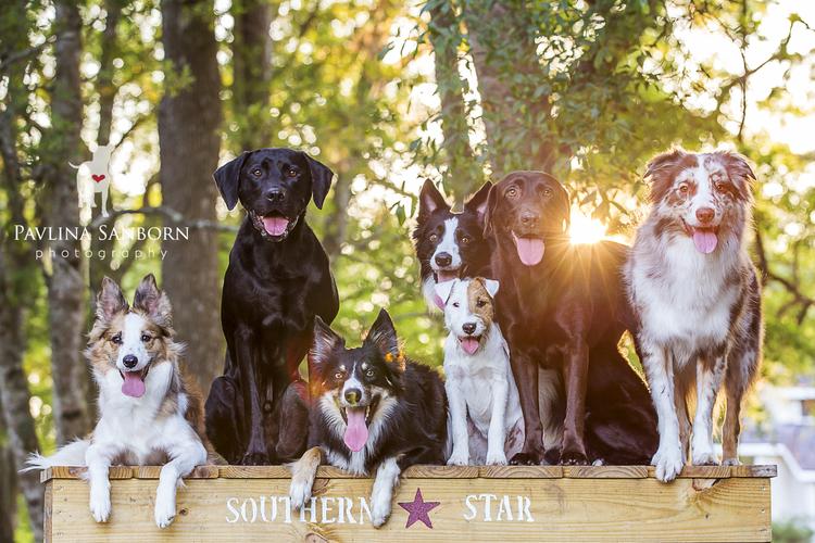 Pavlina Sanborn Photography Sarasota Area Pet And Family