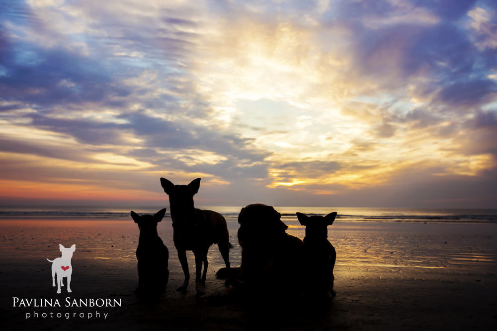 tampabay-sarasota-best-pet-photography-familyphotography