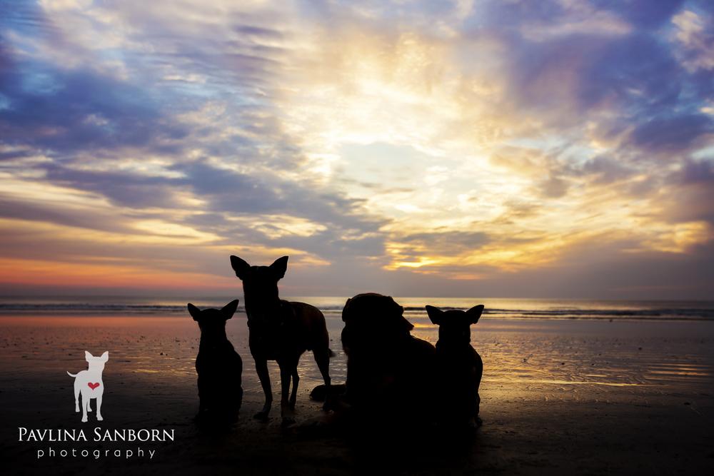 sarasota-best-pet-photography