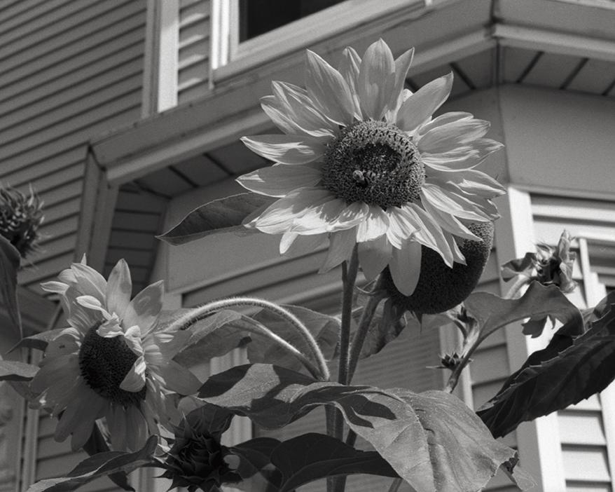 Maine_2012_007.jpg