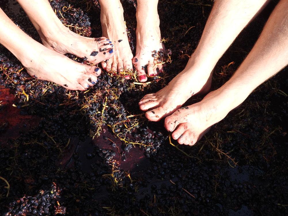 Stomping grapes