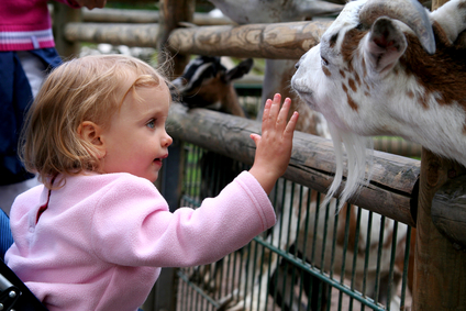 Free Petting Zoo for Kids!