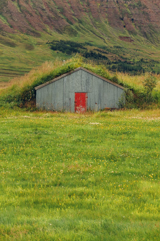 GrassRoof.jpg