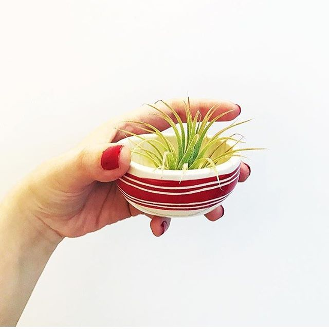 Spent this week restocking some mini picnic bowls. 📷 @follypdx  #relmstudios #treasures #minibowl #picnicbowl #airplant #decor #design #homedecor #mini #airplant #handmade #pottery #stripes #pdx