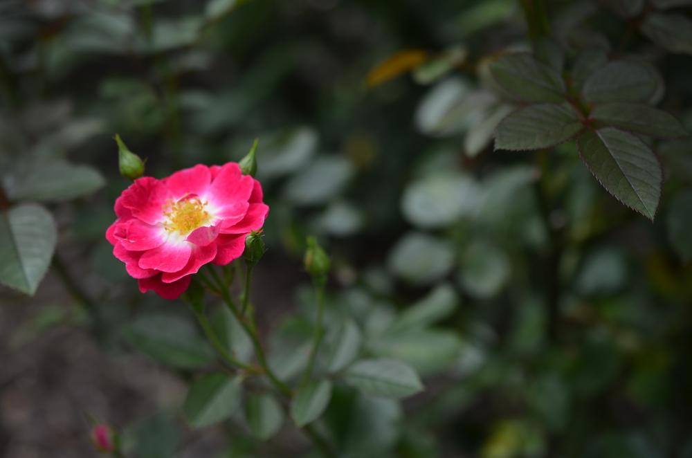 flower.go back again