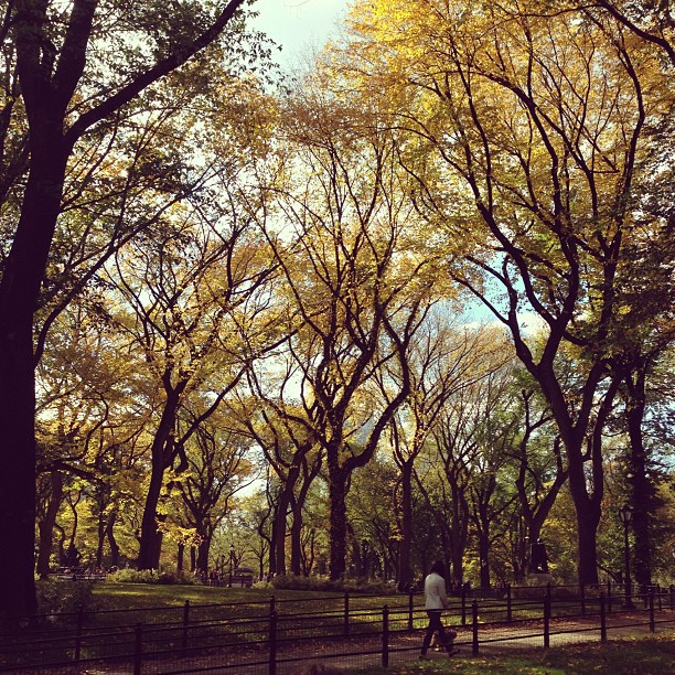#centralpark beauty in the fall. #nyc #foliage (at Central Park)
