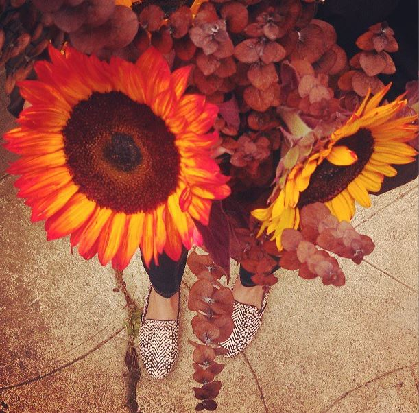 sunflowers-autumn.JPG