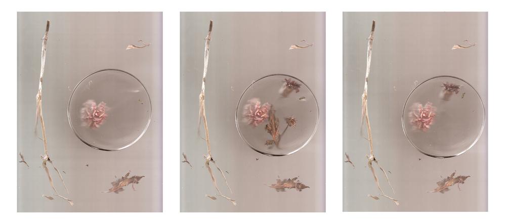 Petri (triptych)