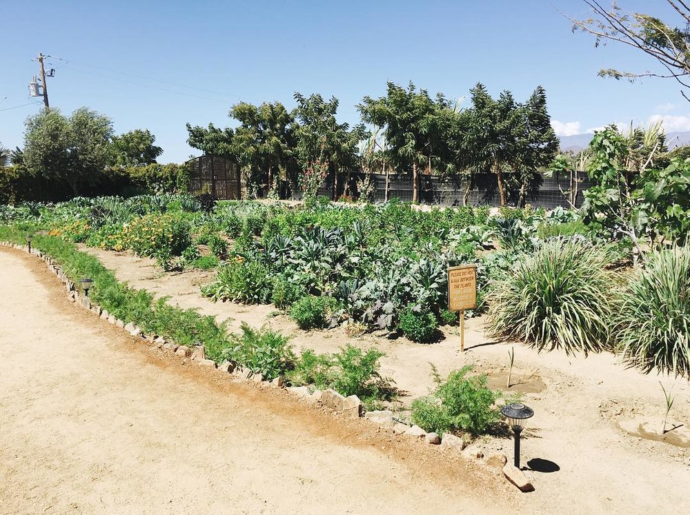 Well, a place like that would be a dream. The beautiful garden of Hierba Buena in El Pescadero, Mexico.