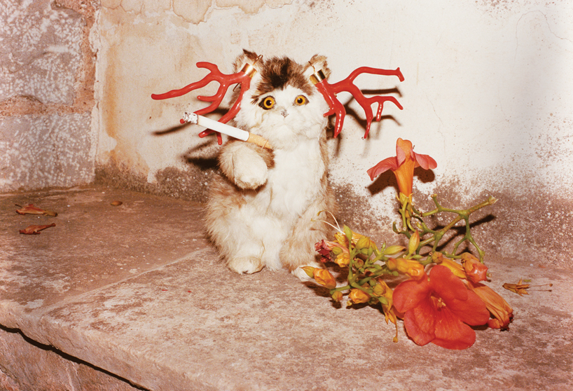 'Cat Smoking', Hydra, 2012