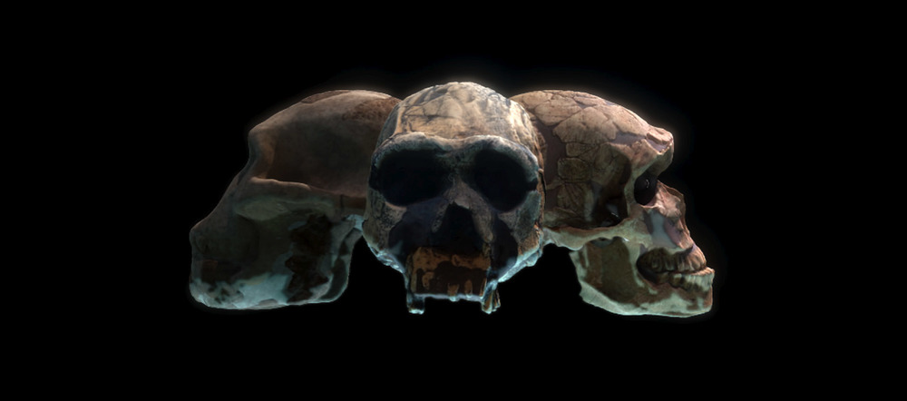 PREHISTORIC AUTOPSY   BBC   See more