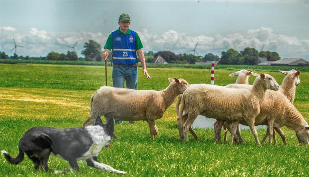Sheepdog Trials_1.jpg