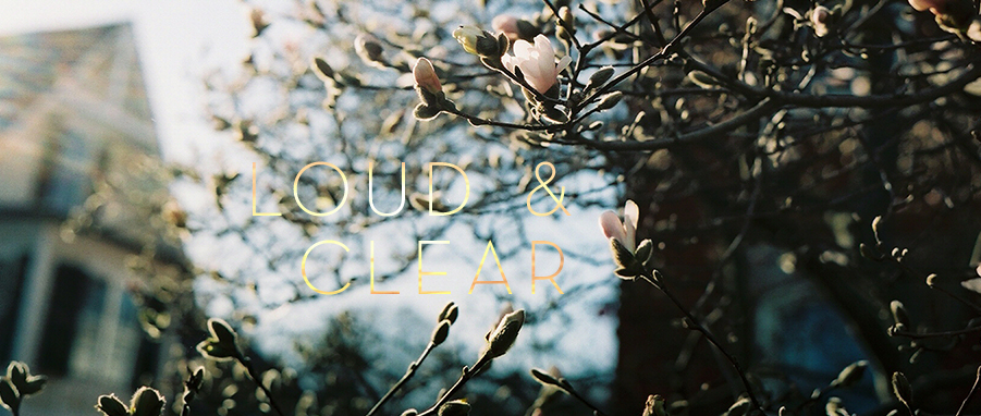 loud and clear magnolias