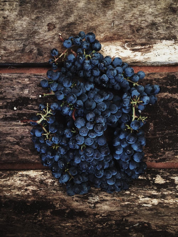 Of Many Parts // Wine Grapes Abbreviations
