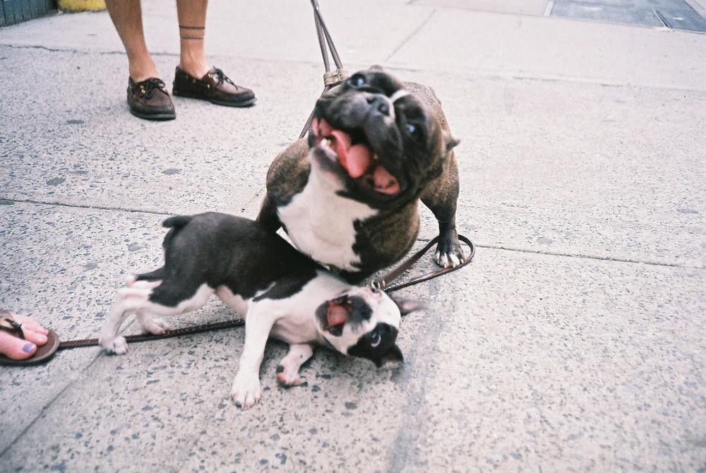 dogsonfilm