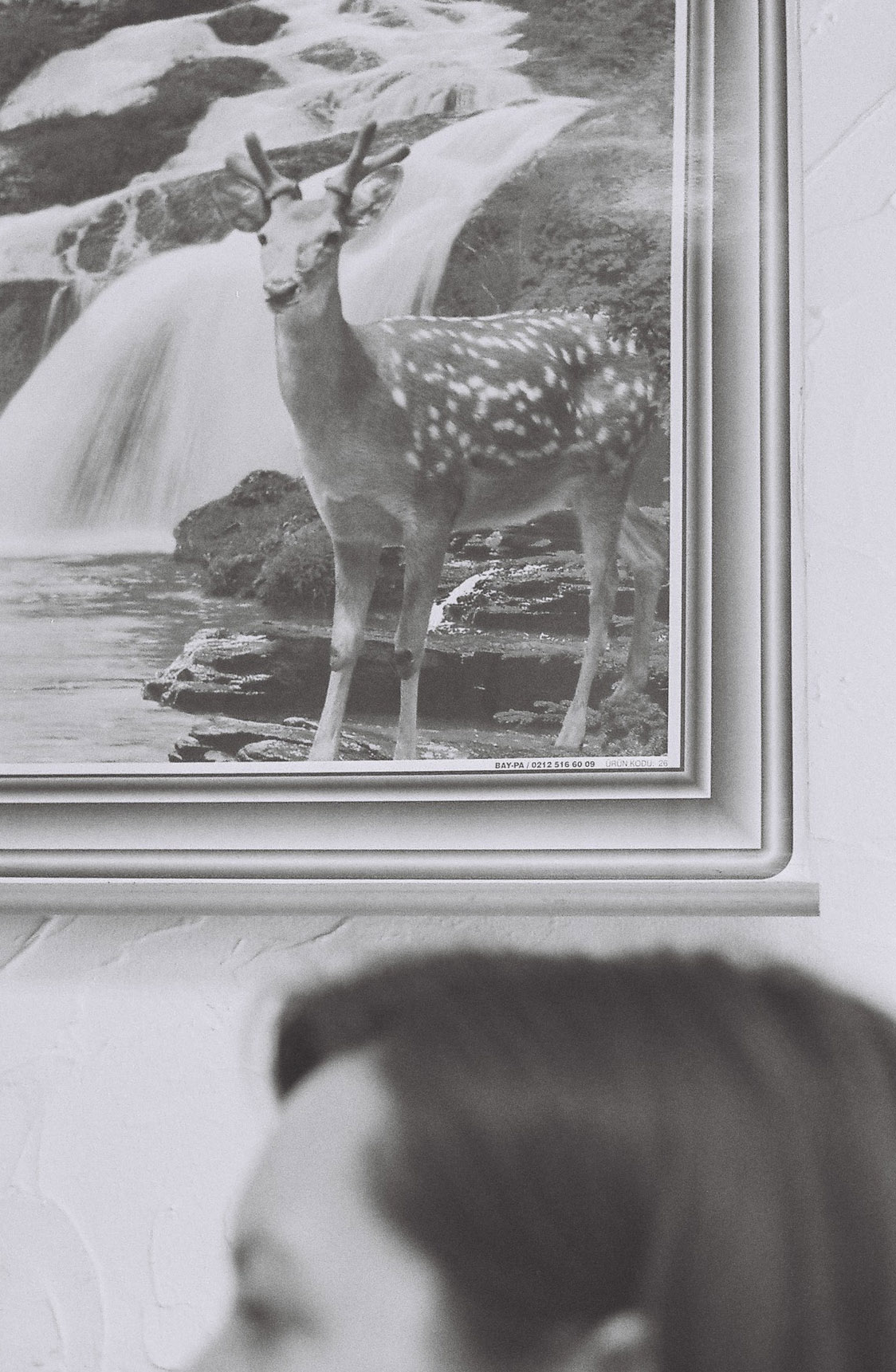 Streatham deer.  Canon A1      nataliehillphotography.com