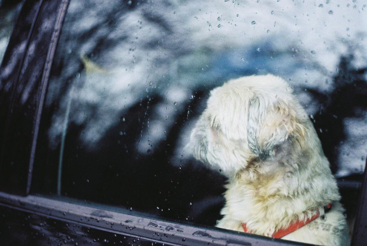 Rain dog.    Yashica Electro   nataliehillphotography.com