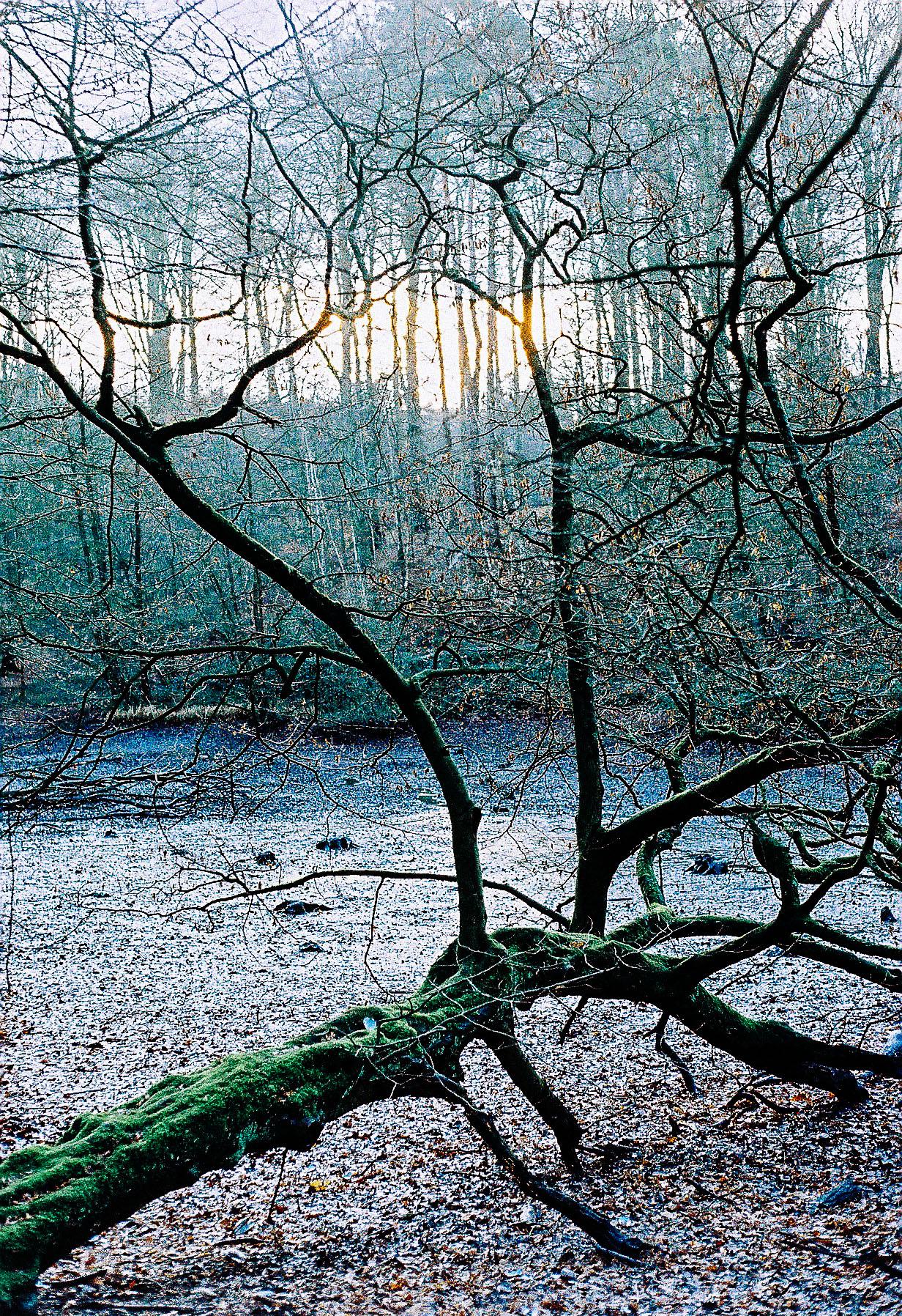 Hippodrome forest. Jan 2015 Yashica Electro nataliehillphotography.com