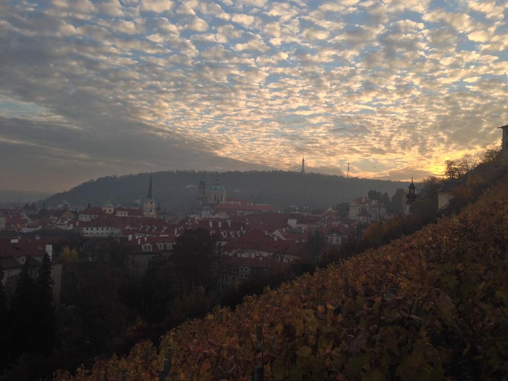 Vineyards at Prague Castle   Prague