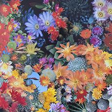 Various Fades: New Work by Stephen Eichhorn September 5, 2014 – October 12, 2014